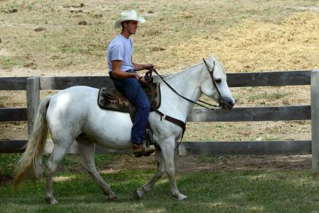 Cowboy Horse Ranch