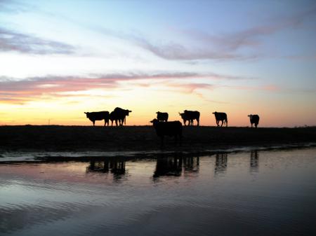 Texas Cattle Ranch - Urlaub